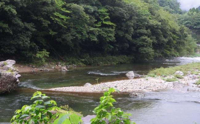 美しい水と森と「匹見ワサビ」 | しまねまちなび